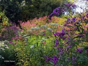 Edie's meadow landscape, September, 2014.  © Edie Parnum.