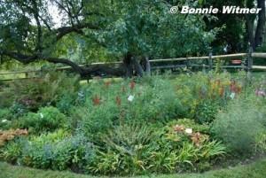 Edie's shade garden. © Bonnie Witmer.  Click to enlarge.