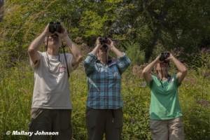 Watching birds in the yard.  Photo © Mallary Johnson.  Click to enlarg.
